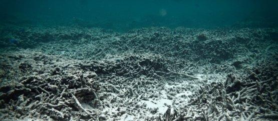 Több mint négyszeresére nőtt a holt területek nagysága az óceánokban