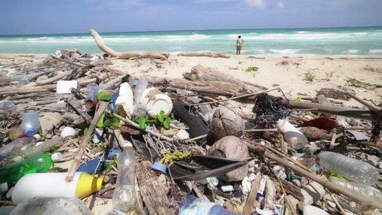 800 kiló műanyagot találtak egy elpusztult bálnában