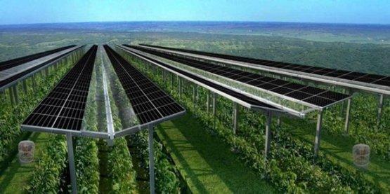 Magyarországon is bevetik az agrofotovoltaikus naperőműveket